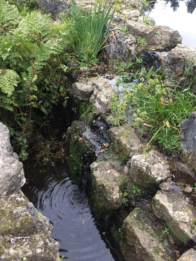 Water Nature Rock - Object Flowing Stream Growth Beauty In Nature