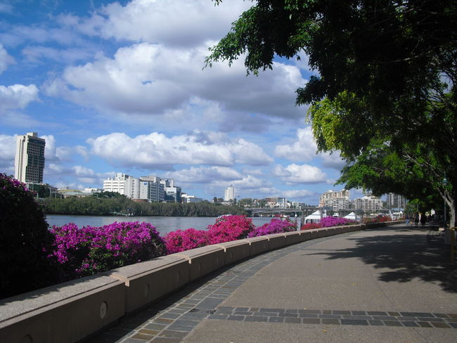 Australia series: Walk at the Brisbane River... River Riverside River View City Cityscape Walkway Brisbane Brisbane River Queensland Australia Branches Blooming Sky Cloudy Outdoors Urban Scene Urban Skyline Sky_collection Trees Travel Traveling The Purist (no Edit, No Filter) Memories Day