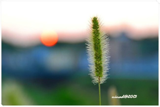 the grass to the sun