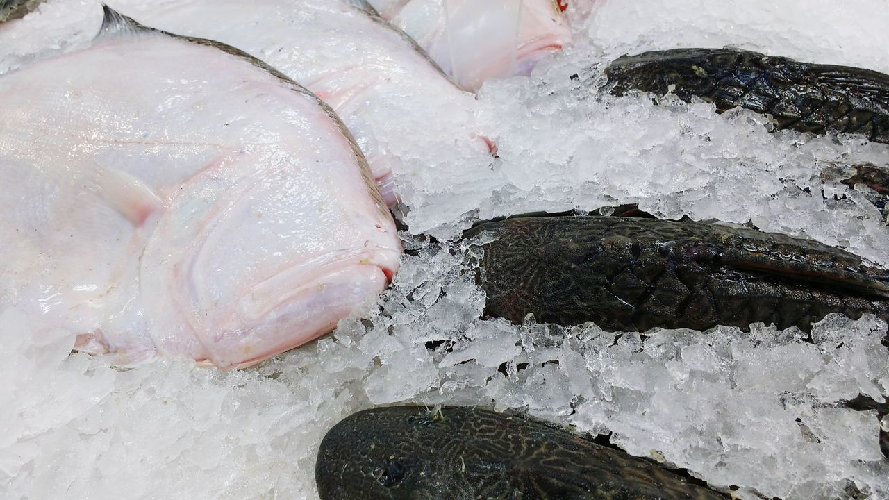 Color Palette Taking Photos Peru Fotografia Lima Colour Of Life Photo Colour Of Nature 2016 Fish Ice Market Minimarket Fish Market Pescado Hielo Mercado Supermercado Minimercado Pescadería Foto Photography Photooftheday Photographing Photographyislife