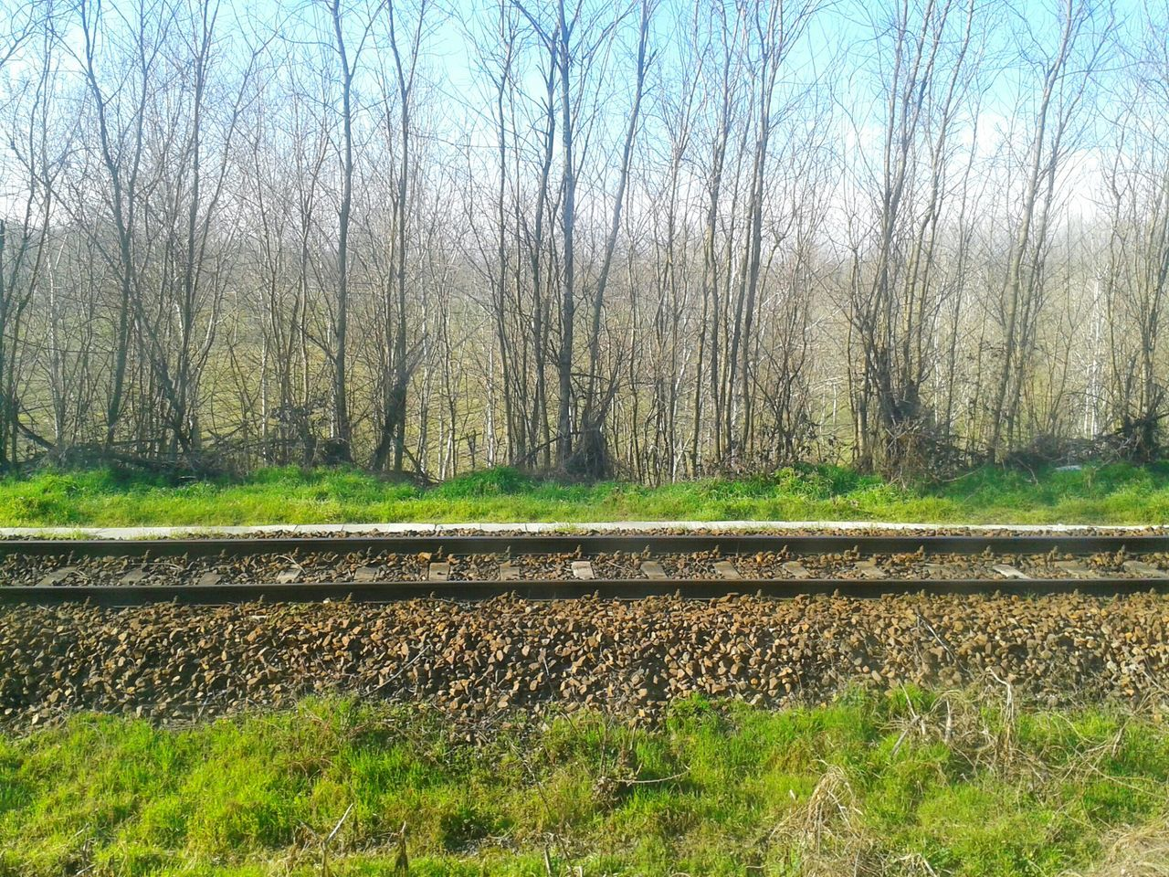 """ From The Train Window . 1"". Pianurapadana Sunny Afternoon Trees Railway Track Mobile Photography S3mini Eyeemfilter F3 lev 5"