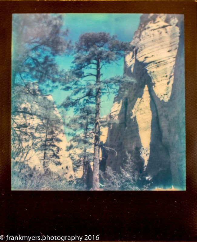 New Mexico Tree Mountain Desert Landscape Impossible Project