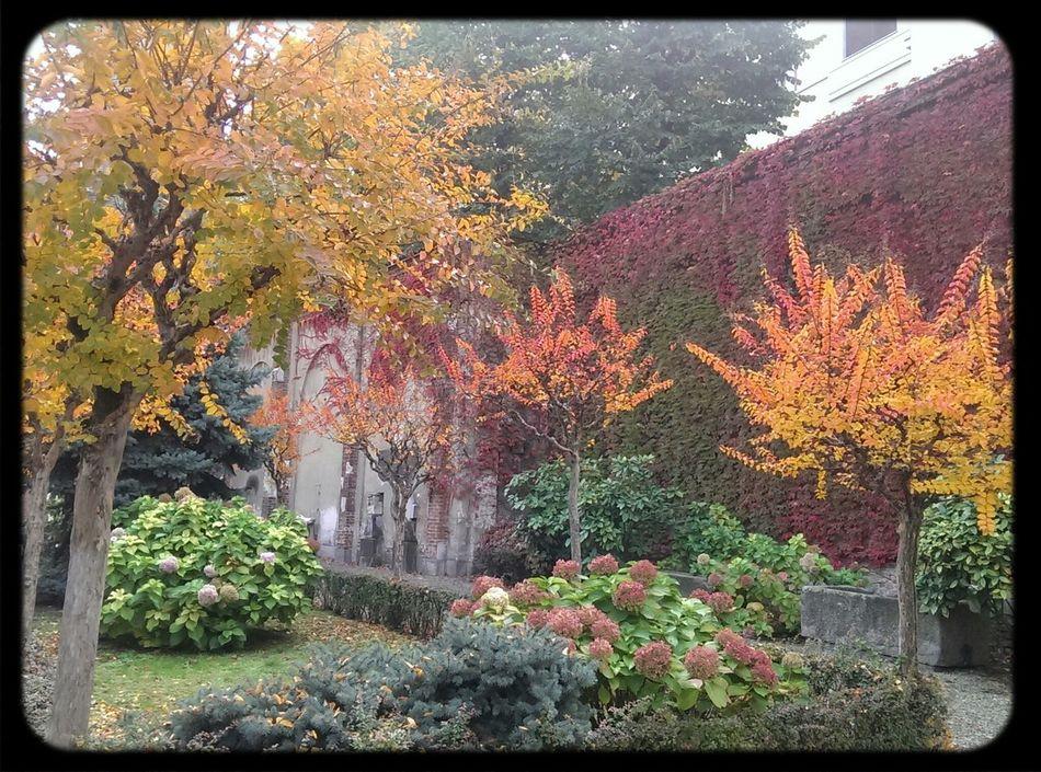 Milano Colors Of Autumn