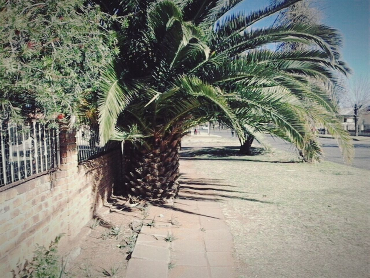 tree, palm tree, nature, growth, outdoors, scenery, no people, day