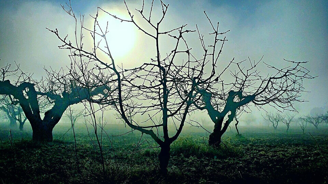 tree, bare tree, nature, landscape, branch, tree trunk, tranquility, outdoors, beauty in nature, no people, sky, scenics, day, lone, dead tree