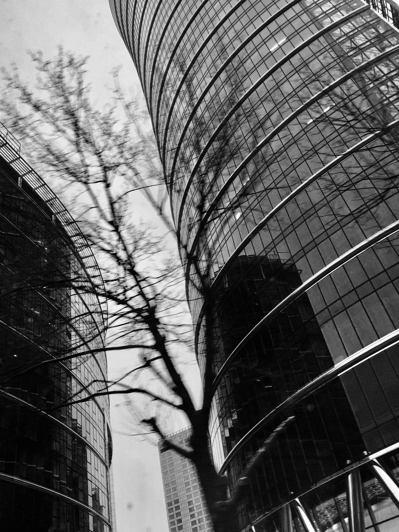 Bulding And Tree Architecture