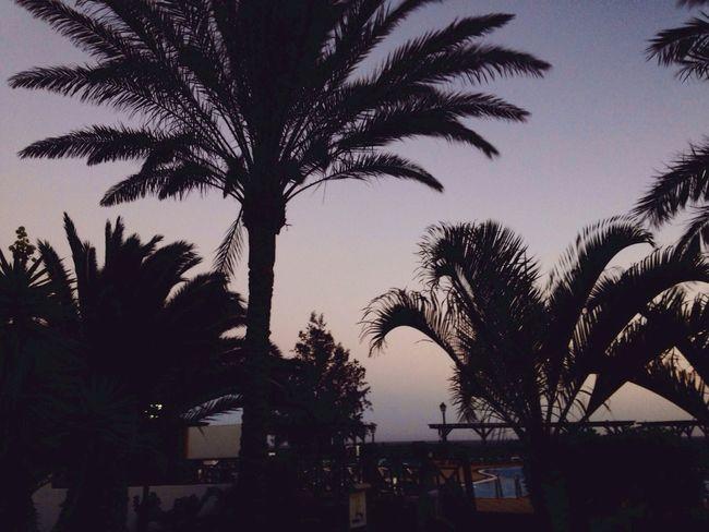 Beautiful ♥ Summer ☀ Summer Nights Enjoying Life