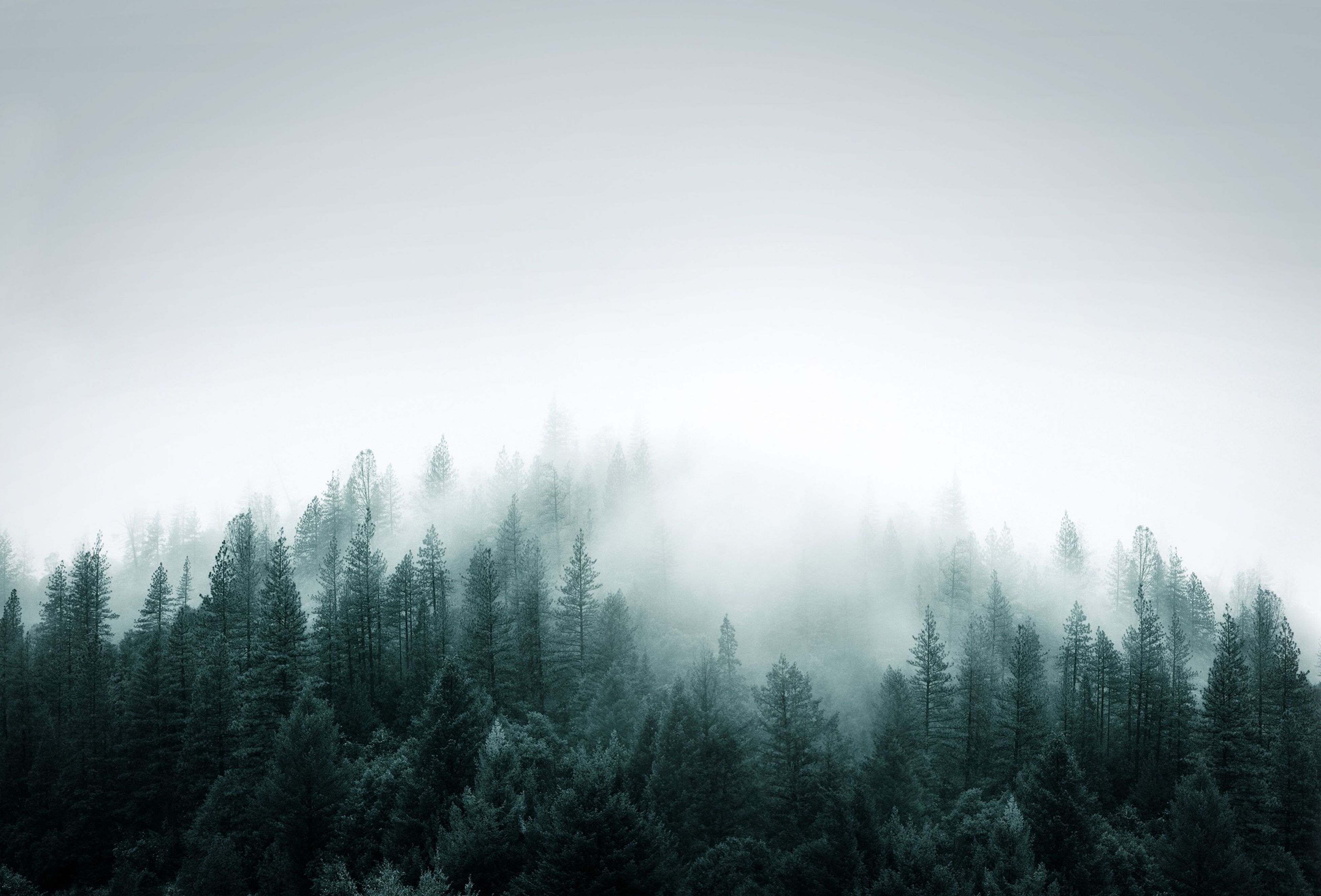 Idyllic View Of Trees During Foggy Weather