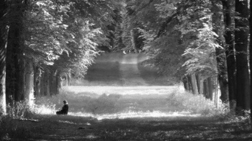 Nuit Blanche = Photo Flou : Meditation 😴 Arbre Forets Blur Blurred Motion Blurry Champ Tronc D'arbre Paysage Vert Herbeux Scène Tranquille Herbe Beauté De La Nature Nature Versailles Noir Et Blanc Gens Tranquillity Journey Bois