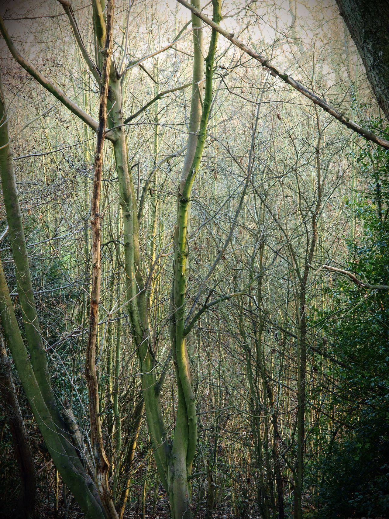 TreePorn Tree Stevesevilempire Hampstead Heath Steve Merrick Olympus WoodLand Zuiko Tree Forest Nature Tranquility Trees Winter