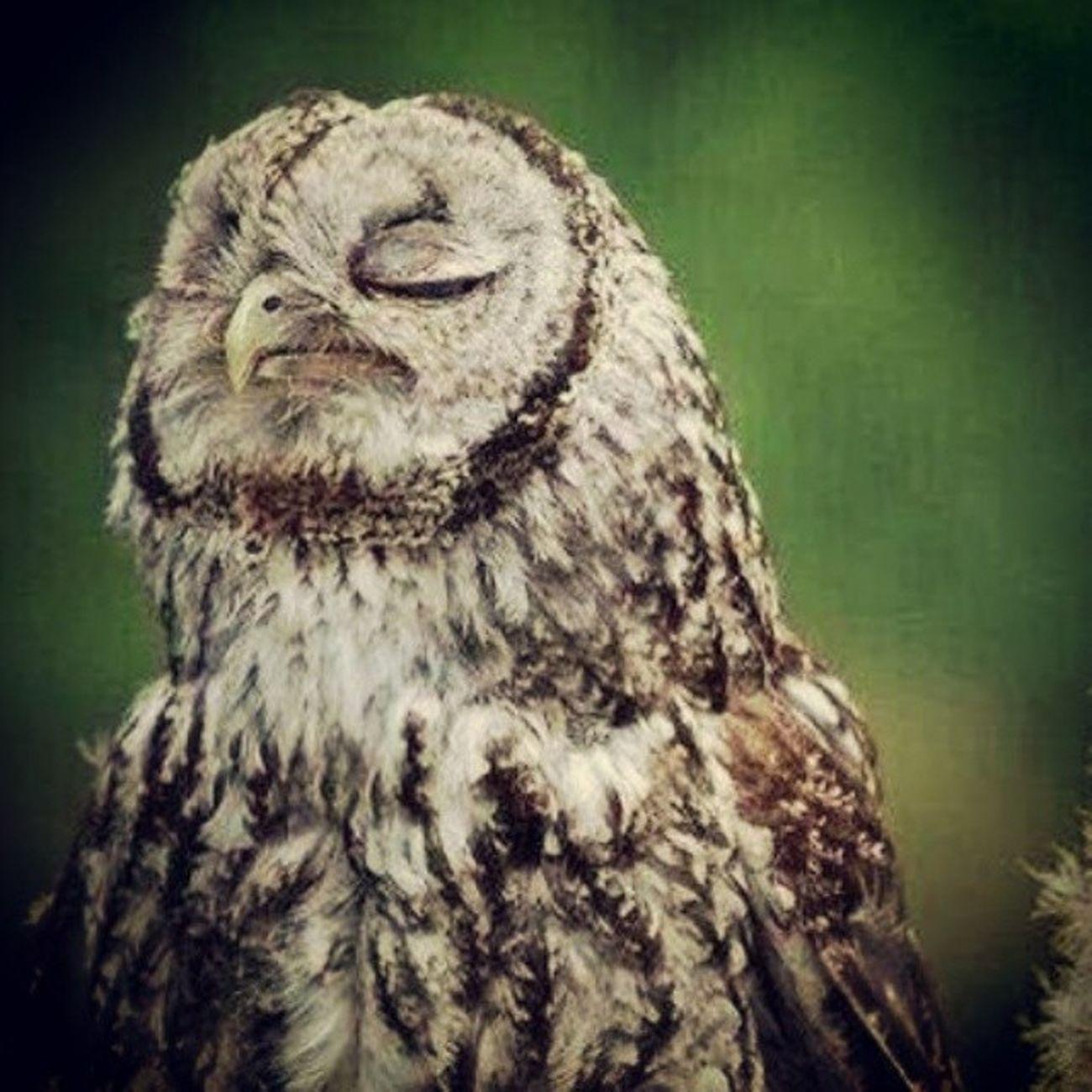 Dinleyiş Huzur Trip Bay bayan kuş