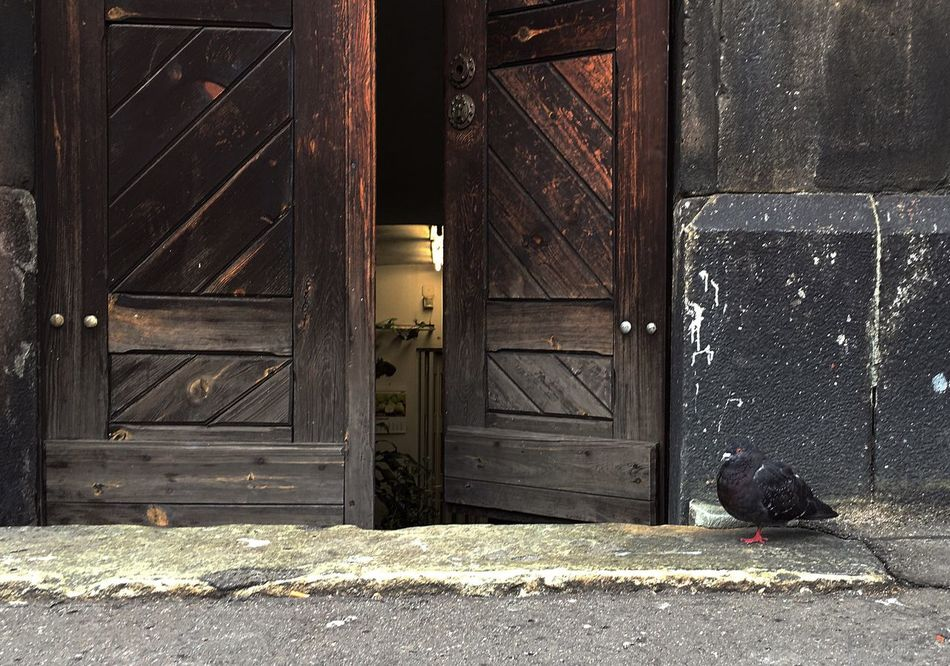 Bird In Front Of Front Door Animal Themes One Animal Side View Street Storytelling Truestory Mobile Photography Mobilephotography City Life Streetphotography Architecture Minimalism Close-up Walking Day