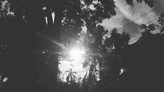 Tree Enjoying The Sun Walking Around Relaxing Camping GOTOgether Back Thailand