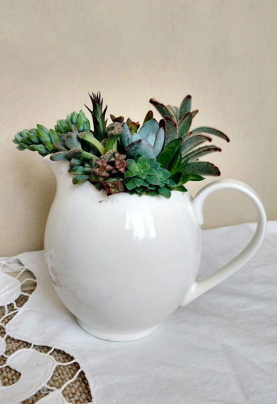 The teapot planted with succulents Table Indoors  No People Freshness Close-up White Background Day ArtWork Green Color Nature Beauty In Nature Artphotography Flowers,Plants & Garden Growth Plant White Color Succulents Teapot Cactus Pottedplants Leaf Petal Decoration
