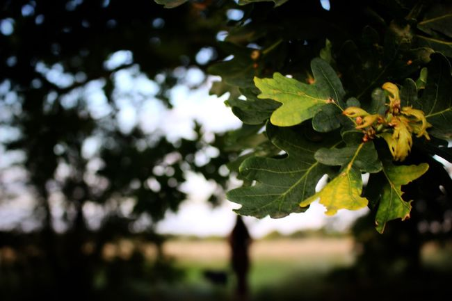Taking Photos Summer ☀ Ferry Meadows Natural Beauty Love Green Trees Leaves Outdoors Canon Canonphotography