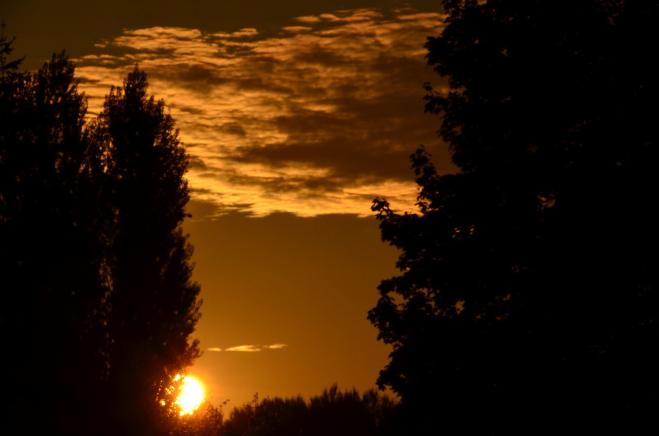 sunset, tree, nature, beauty in nature, silhouette, scenics, tranquility, no people, tranquil scene, sky, outdoors, growth