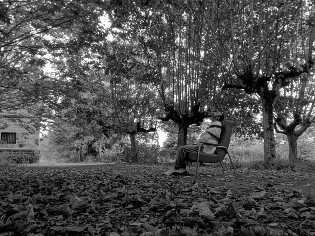 tree, sitting, one person, nature, day, relaxation, outdoors, full length, leaf, growth, young adult, adult, people, pixelated