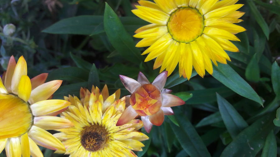 Paint The Town Yellow Beauty In Nature Blooming Close-up Flower Nature Outdoors Plant Yallow Yellow
