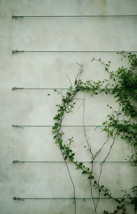 Composition Metal Plants Growing Into The Wall Urban Geometry Facade Detail No People Surfaces And Textures Outdoors Photograpghy  Metal Wire No People, Minimal_mood Simplicity In Nature SIMPLY