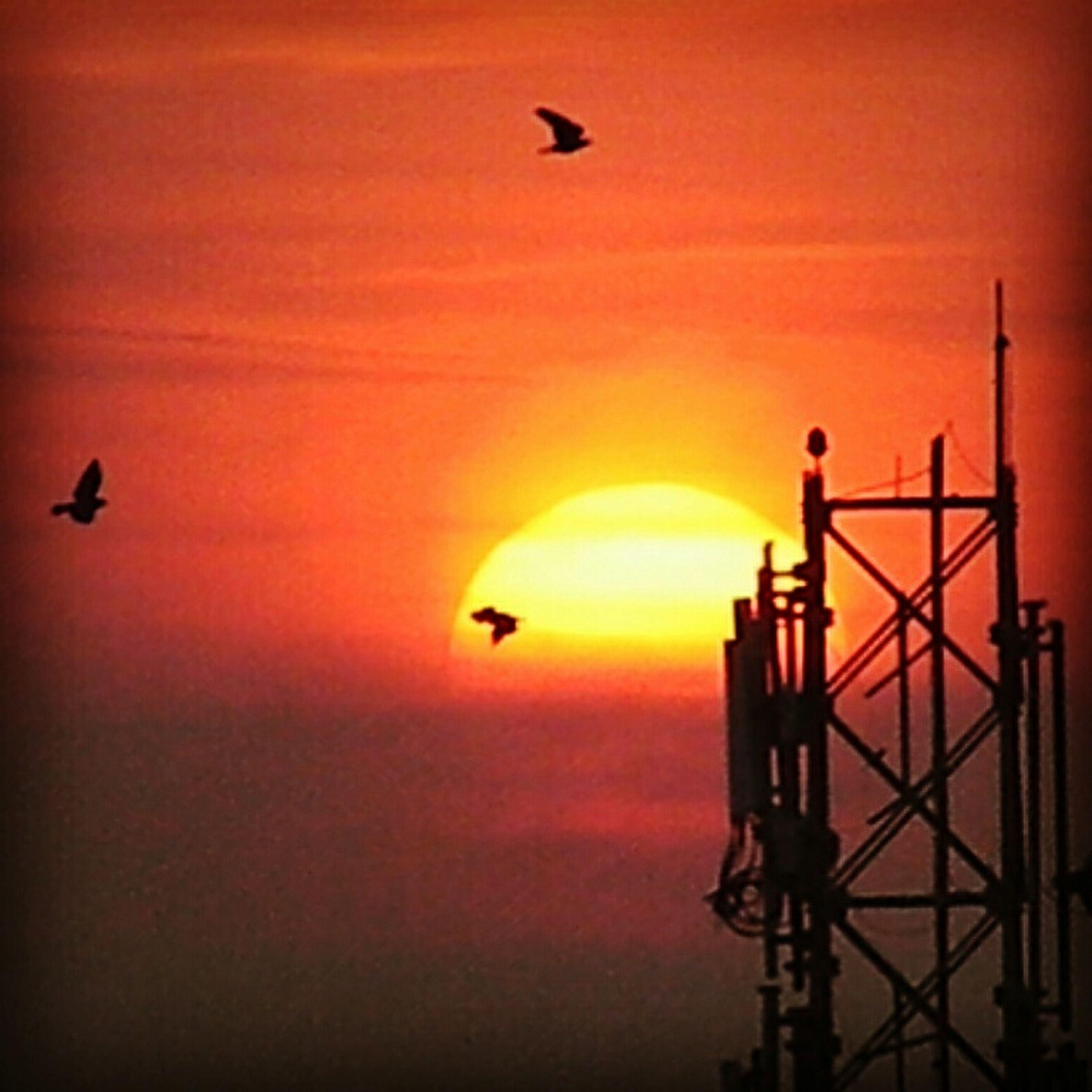 Early Morning Sunrise Birdy♥♥♥ Extra Zoom Lense Satisfaction