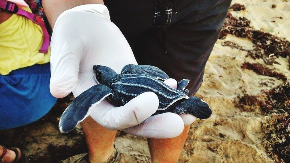 Sea leather back Turtle! Check This Out EyemPuertoRico Nature_collection Eyem Gallery Color Portrait Enjoying Life