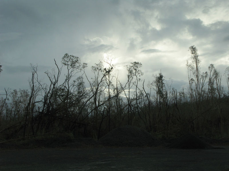 an atmospheric image of damaged trees and cloudy skies after cylone yasi Atmosphere Bleak Cloud Depressing Dramatic Sky Dystopian Grimey Outdoors Storm Damage Striped Bare Tree Tropical Cyclone Wood WoodLand