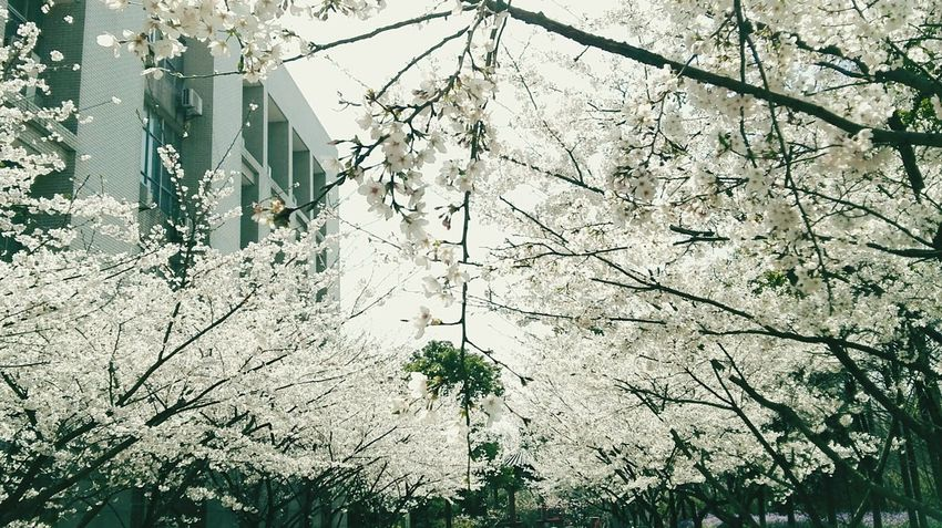 Tree Low Angle View Growth No People Branch Nature Outdoors Day Sky Beauty In Nature Animal Themes 🌸舞い落ちる
