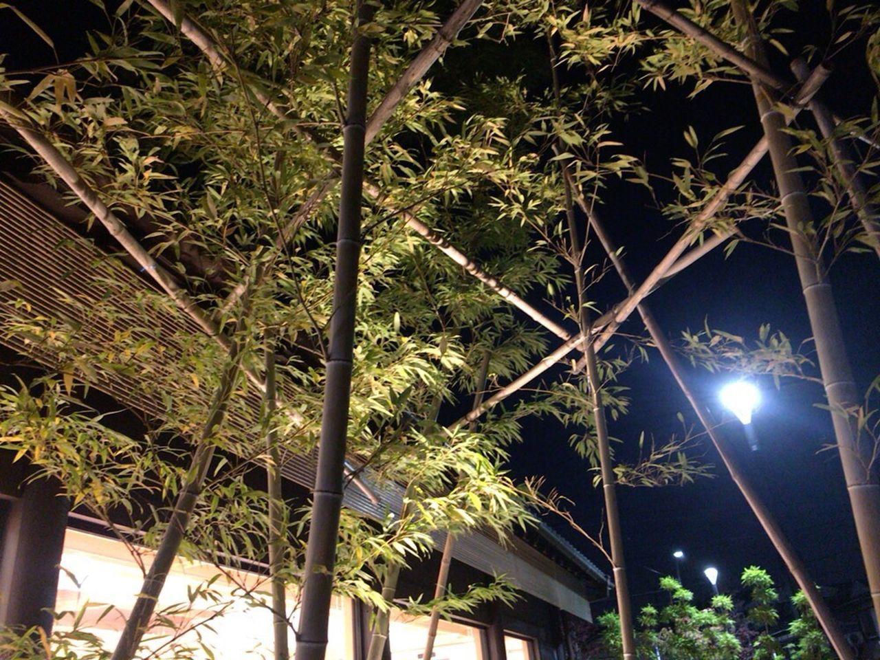 Kyoto,japan Kyoto NIght Lights Kyoto Night Kyoto Bamboo Bamboo Japanese Bamboo Japan Bamboo Bamboo Night Lights