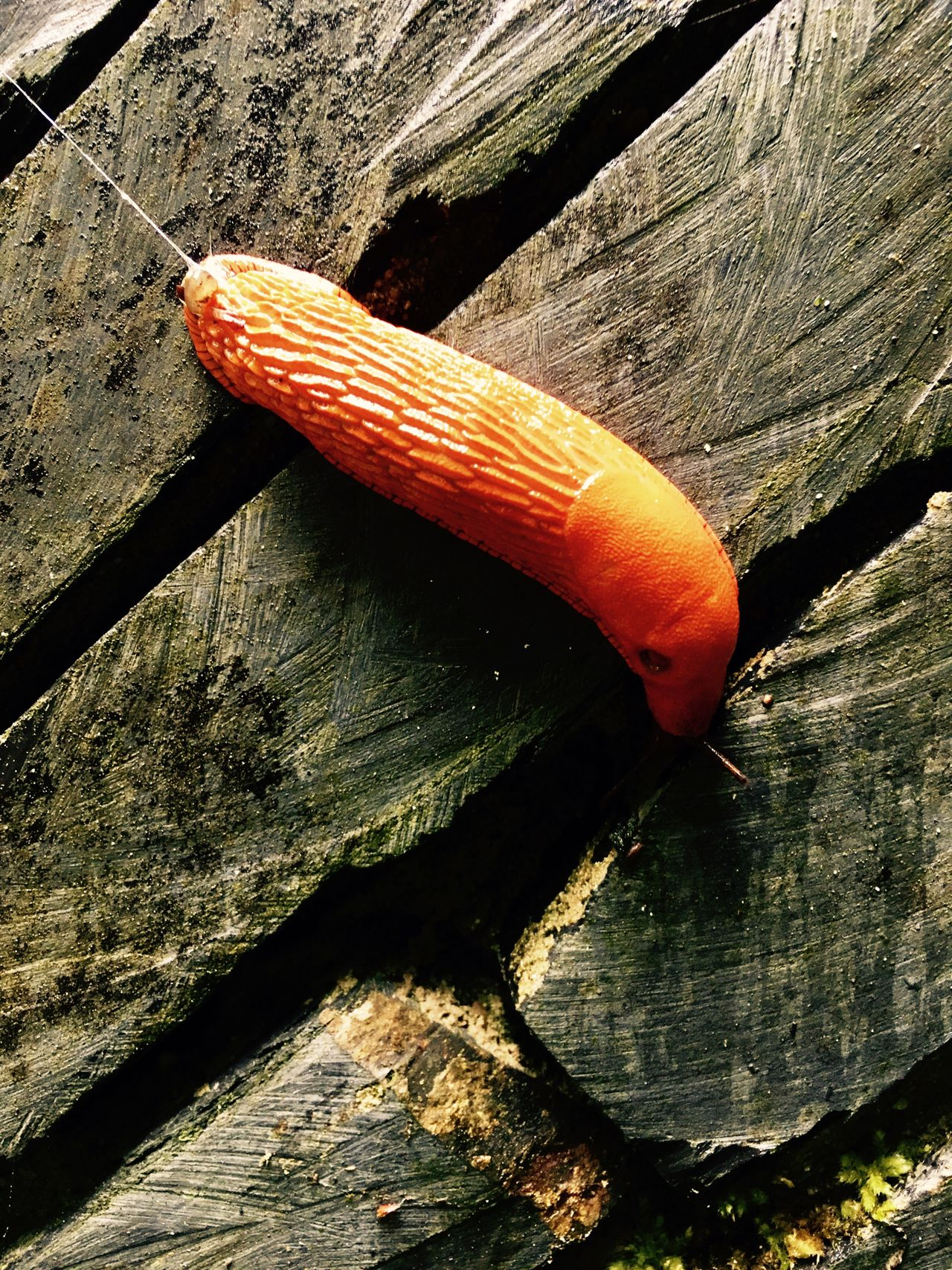 One Animal Close-up Animal Themes Outdoors Nature Slug Iphonese