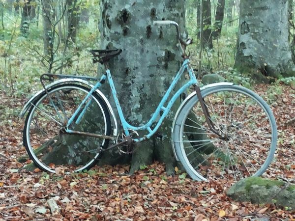 Outdoors Abandoned Bicycle Day Tranquil Scene Beauty In Nature Object Nature Stationary