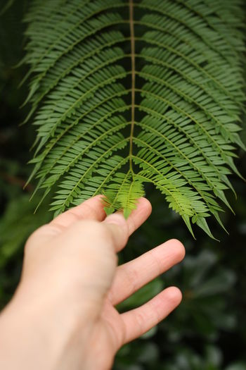 in contact with nature Barcelona Green Green Color SPAIN Close-up Day Fern Freshness Green Color Green Leaves Green Nature Greenery Growth Holding Human Body Part Human Hand In Contact With Nature Leaf Nature One Person Outdoors People Plant Real People Touching