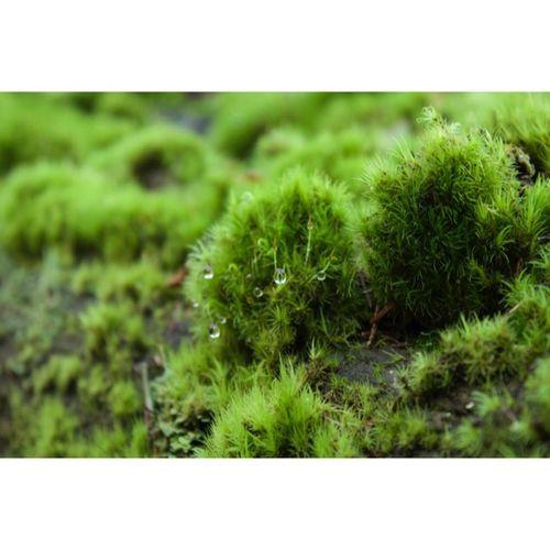 Moss in Stanley Park Canonrebelt5 Moss