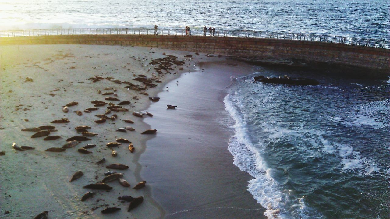 Water Nature Outdoors Beach Beauty In Nature Seals Sealion  Mud Day Sky