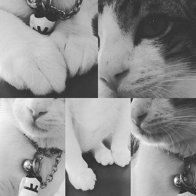 🐈 Cat