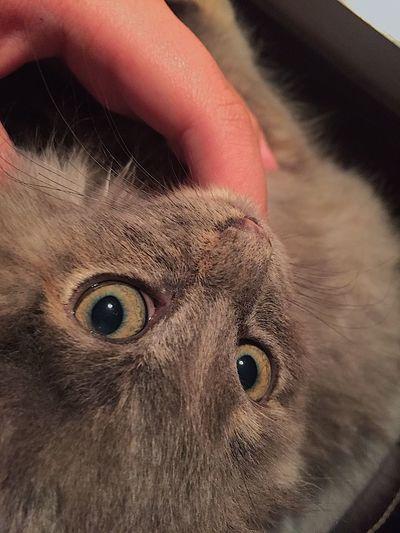 I lov u♥️🐱🐈🌨🌬 Me Encanta!! Cats ILove Domestic Cat Feline Day Winter
