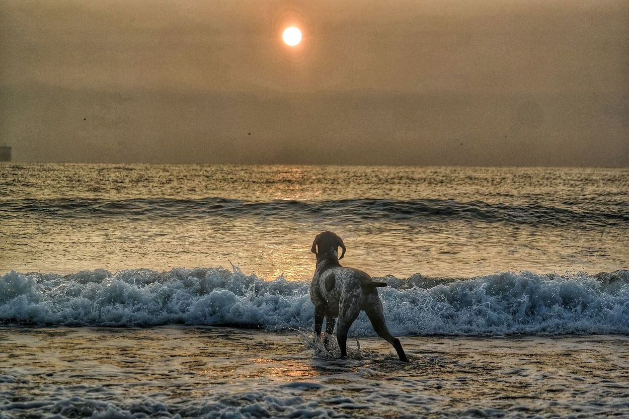 Even the pup admired the sunrise! Germanshorthairedpointer Sun Rise Tynemouth