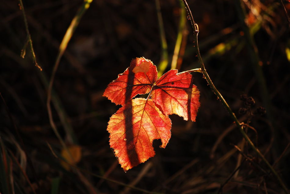Beautiful stock photos of leaf, Autumn, Beauty In Nature, Change, Close-Up