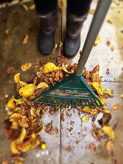 Raking leaves Real People High Angle View Low Section Leaf Human Leg Outdoors Day Close-up Working Human Body Part Men People Autumn Close Up Autumnal Fall November Raking Rake Leaves Pile Gardening Jobs Job Wellingtons