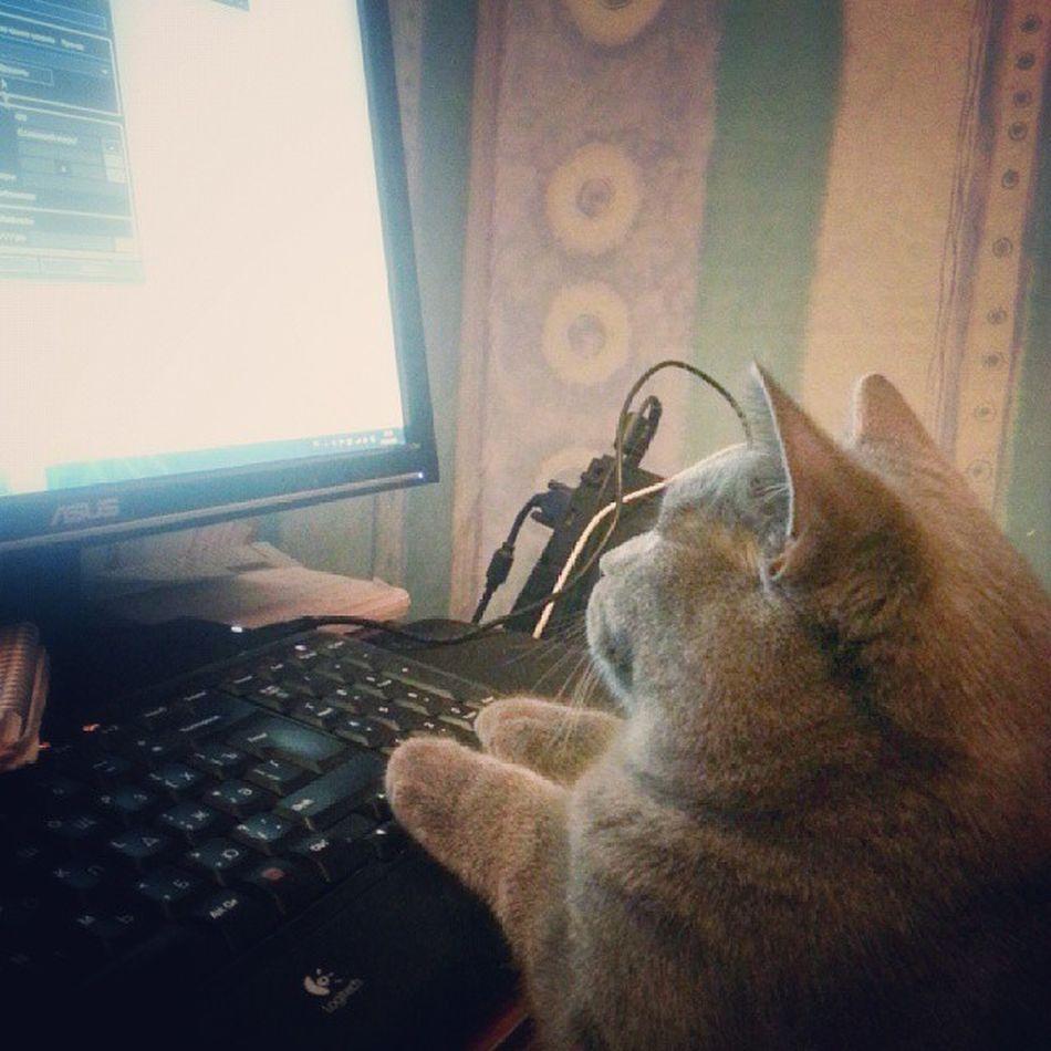 Ну и на ночь глядя котика вам) котан Кас юзер спокойнойНочи