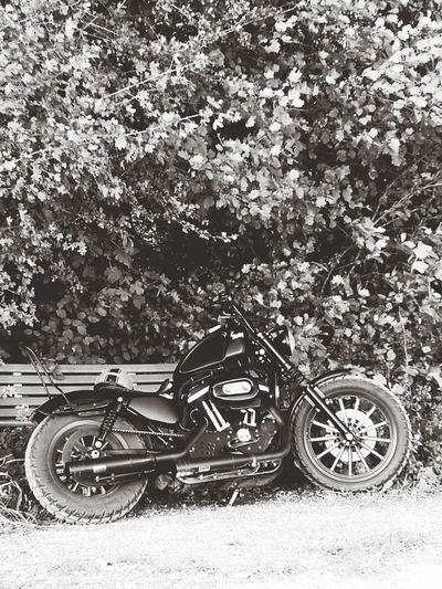 Transportation Mode Of Transport Outdoors Motorcycle Nature Harley 883 Ontheroad Sommergefühle Iron black