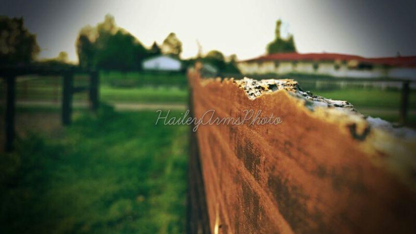 Nature EyeEm Best Shots Summer Horses