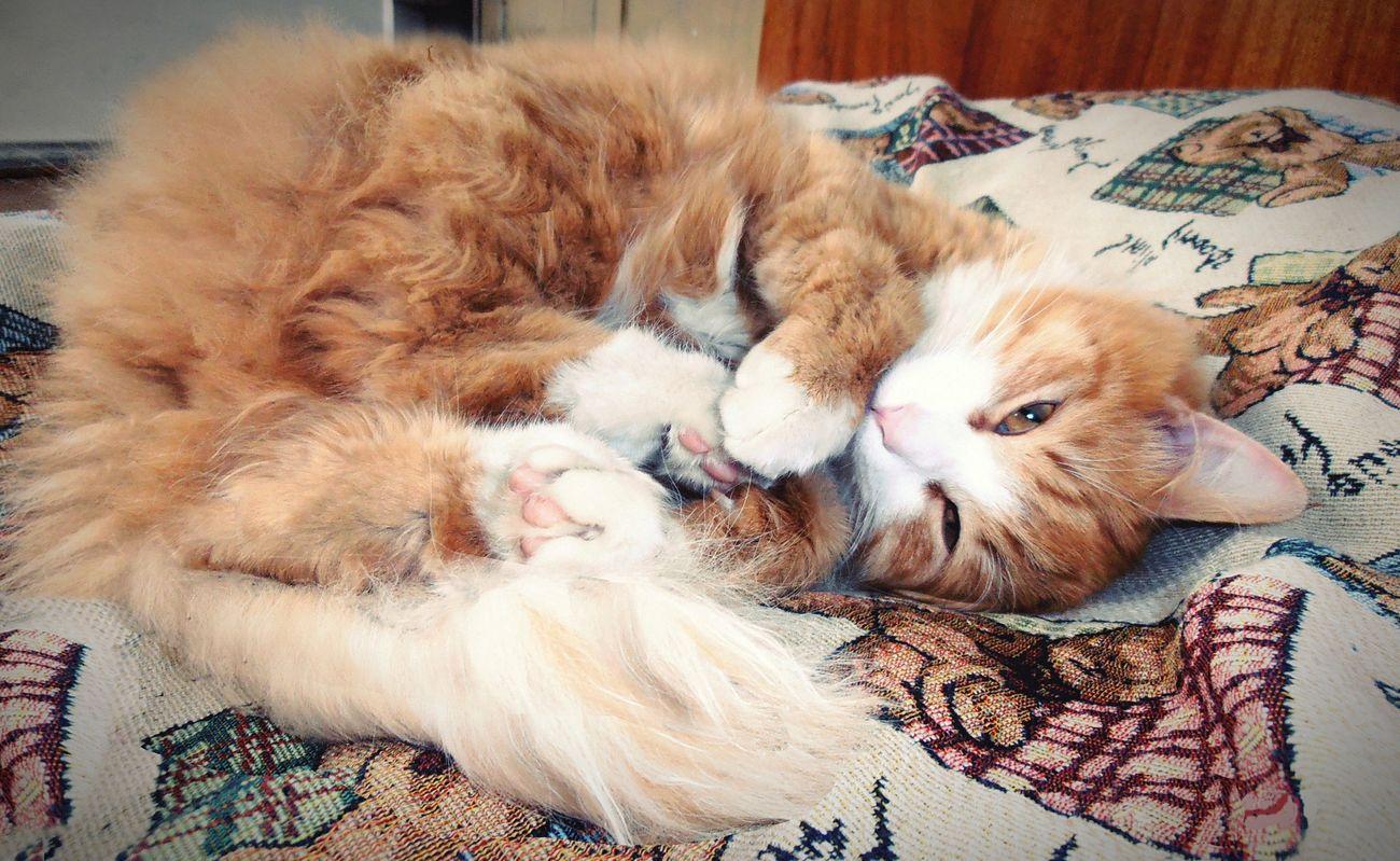 рыжий кот Рыжик приоткрыл глазки от сна для фотографии FUNNY ANIMALS Cutie Asleep Eyeem Best Shots - Animals Meow Whisker Cute Cat Киса😇😸😻 EyeEm New Here