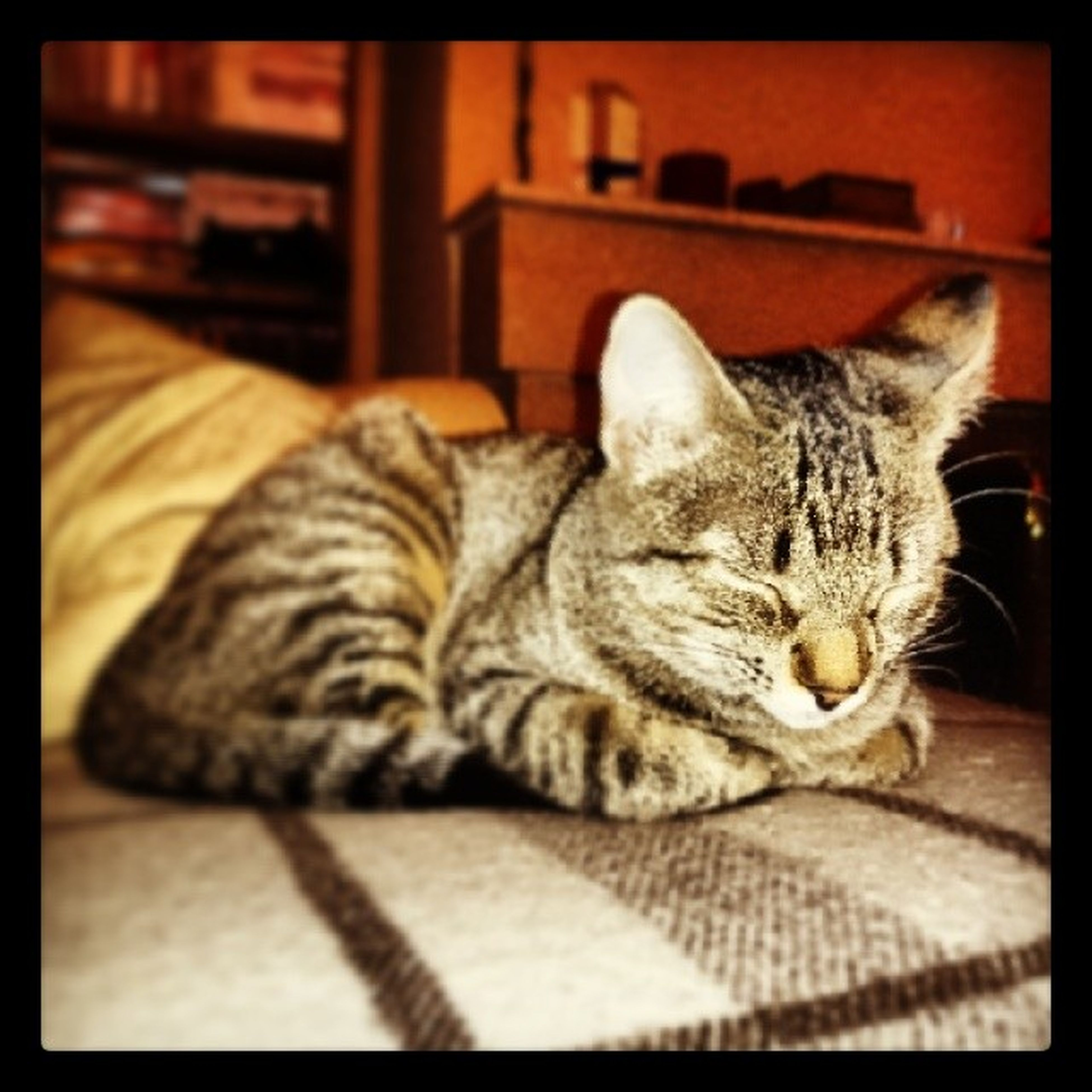 Again!! Itzing ! Siesting Igerscats Igersanimals Xperiaz1