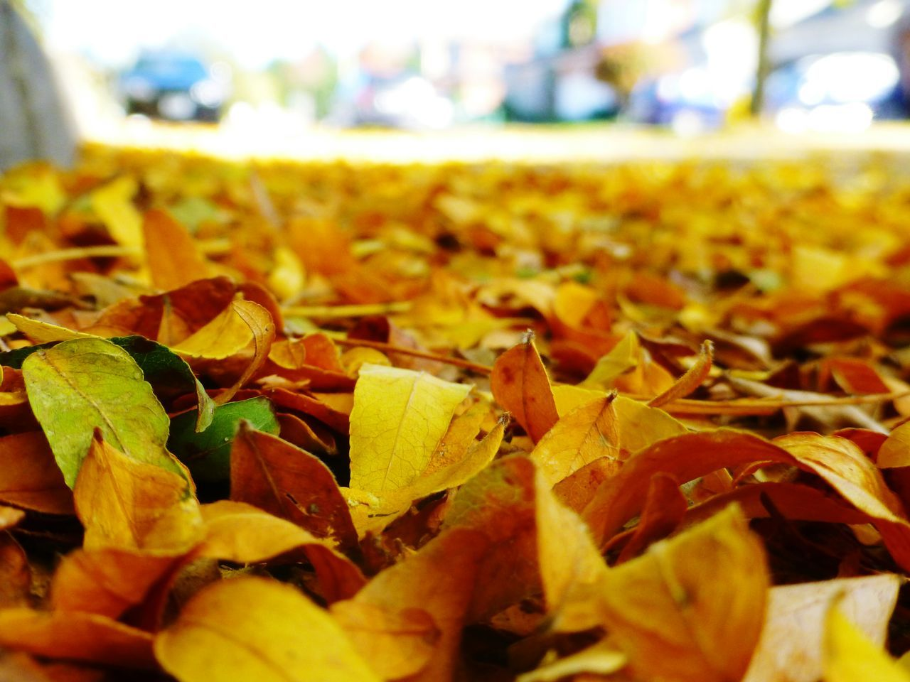leaf, autumn, change, close-up, dry, nature, no people, day, beauty in nature, fragility, outdoors, yellow, growth, freshness, maple