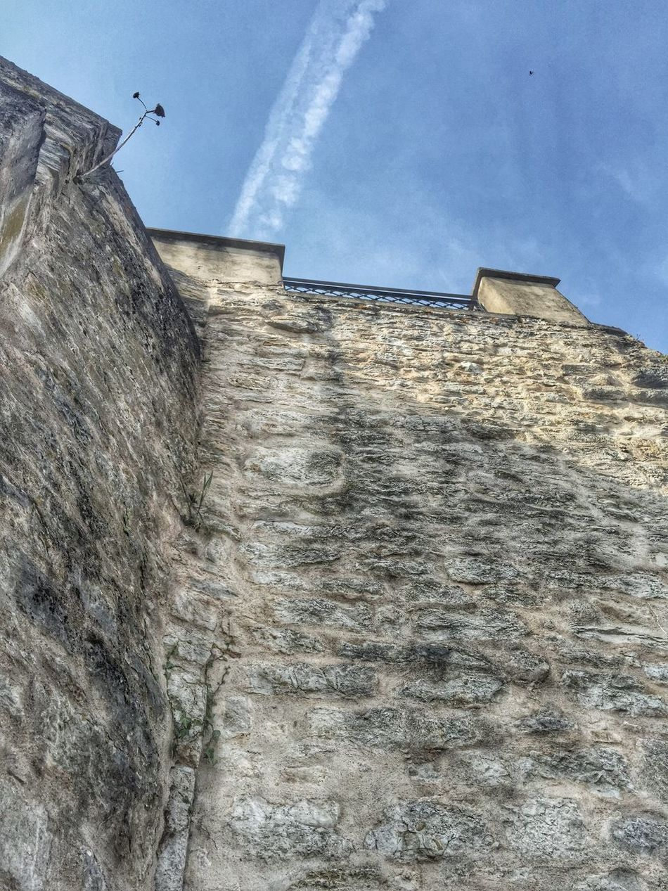 Looking up to the strong but lonely flower in the castle wall.