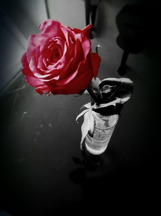 Roses Red Rose Halftone Artphoto Photoart