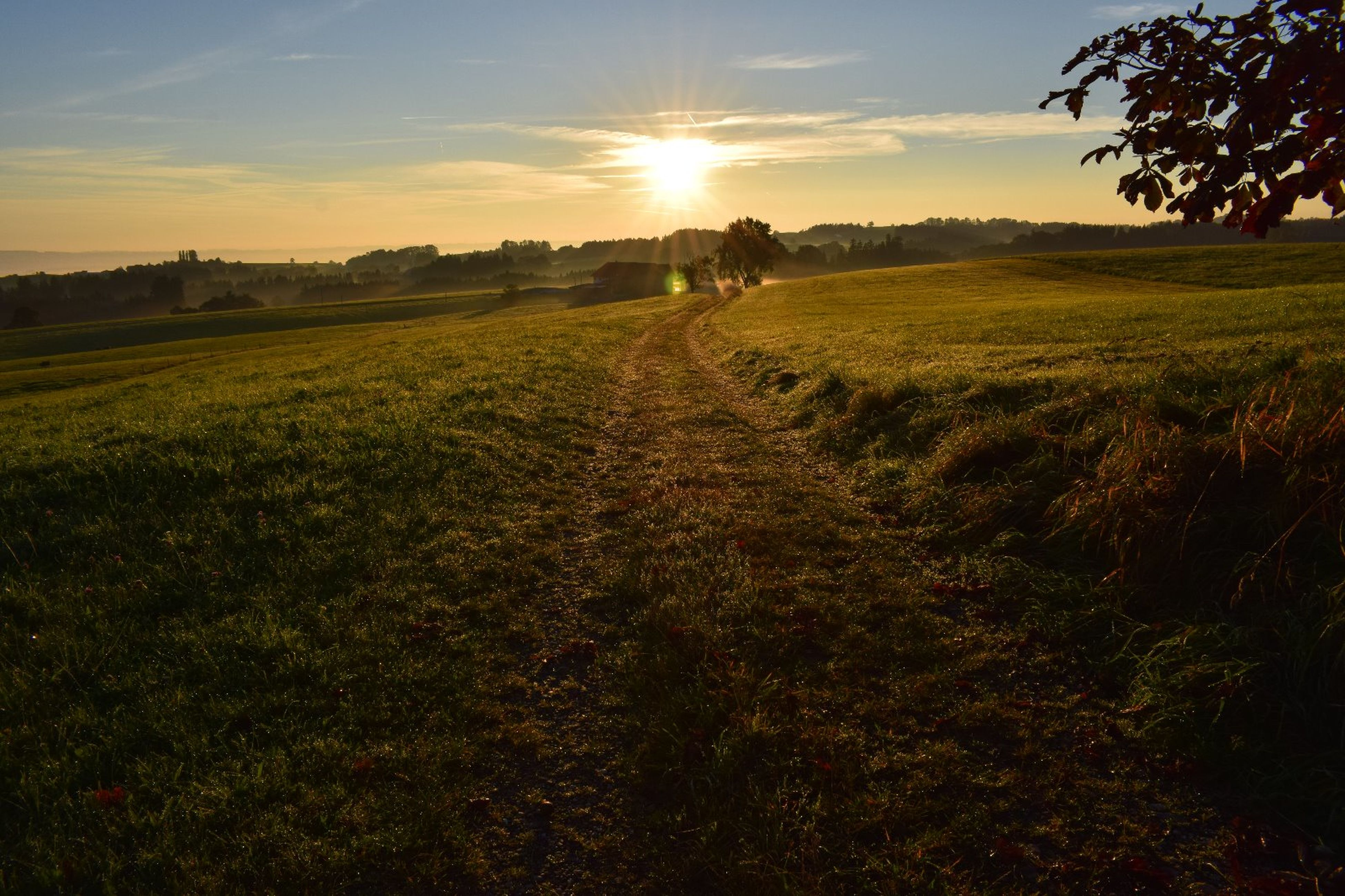 sunset, sun, sunlight, landscape, tranquil scene, grass, tranquility, tree, field, green color, sunbeam, beauty in nature, scenics, lens flare, nature, sky, rural scene, farm, distant, person, non-urban scene, sunrise - dawn, outdoors, vibrant color, agriculture, atmosphere, back lit, remote