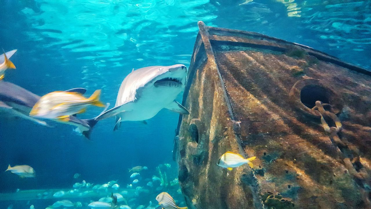 Animal Themes Swimming Fish Underwater Sea Life Animals In The Wild Water Close-up School Of Fish Large Group Of Animals Aquarium No People Nature UnderSea Outdoors Shark Miles Away