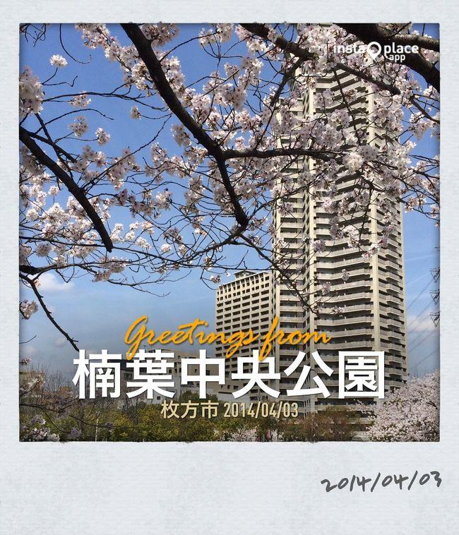 桜✿満開です(^O^)/ Walking Around