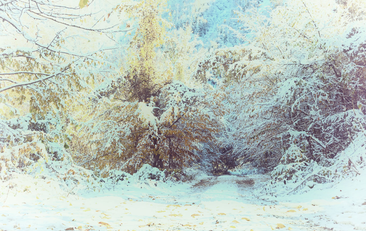 Snowy Backroads Backgrounds Backroads Bolu..TURKEY Branches Cold Temperature Full Frame Icy Icy Wonderland Leaves Mountains Nature Outdoors Roads Snowing Snowy Treescape Winter Winter Wonderland Wintertime